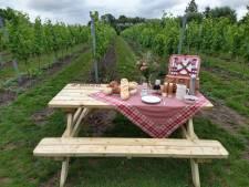 Picknick in de wijngaard, koffie branden of bezoek aan de microbrouwerij: verken per fiets de lokale handelaars in de groene rand rond Brugge