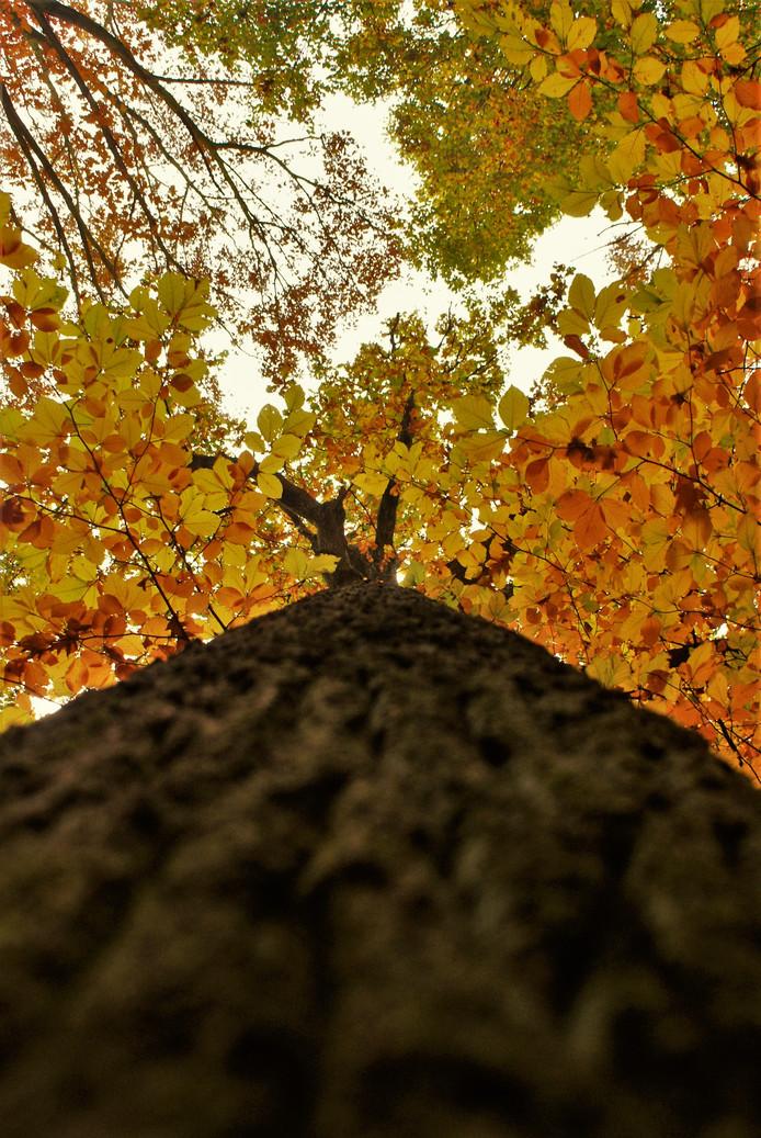 een leuk effect, je camera recht tegen de stam zetten. zo krijg je een ander perspectief in de foto.