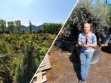 Geen Bonsai bomen meer in Ens: Ad kapt ermee