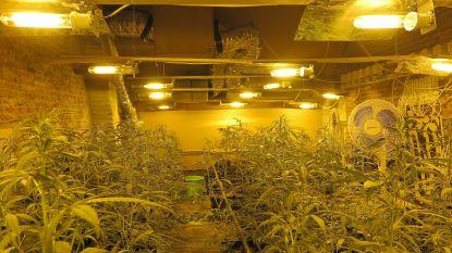 Aanhouding van cannabisboeren verlengd