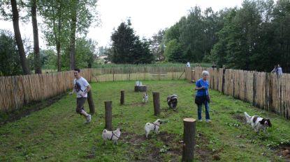 Baasjes, opgelet: binnenkort hondenweide van halve hectare (!) in Lisdodde