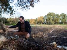 Bos waar mens en dier kunnen eten: aanplanten voedselbos Hoogerheide begonnen