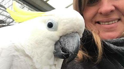 Opvang ontfermt zich over 64 papegaaien van kweker zonder vergunning