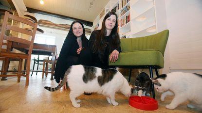 Katten koning in hun eigen café