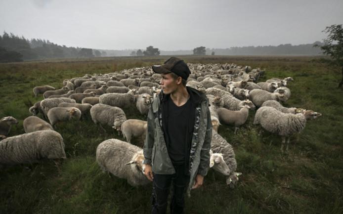 Schaapsherder-in-opleiding Luc Teeuwen met zijn kudde bij de Stiphoutse bossen afgelopen juni.