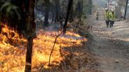 Slechts één weg richting veiligheid: inwoners van Australische badplaats proberen angstvallig te evacueren
