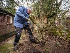 Struikrovers Eindhoven redden leven van krulwilg in Clematisstraat