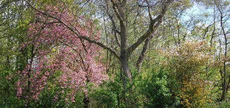 ChristenUnie West Betuwe wil herplant voor honderden gekapte bomen en krijgt haar zin