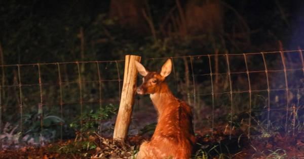 Motorrijder ernstig gewond na botsing met hert in Loenen, dier afgemaakt.