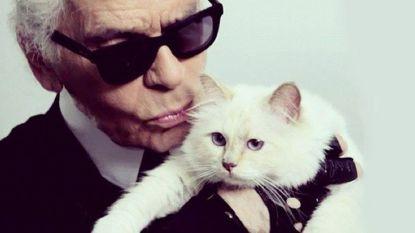 IN BEELD. Een blik op het luxeleventje van Choupette, de chouchou van Karl Lagerfeld