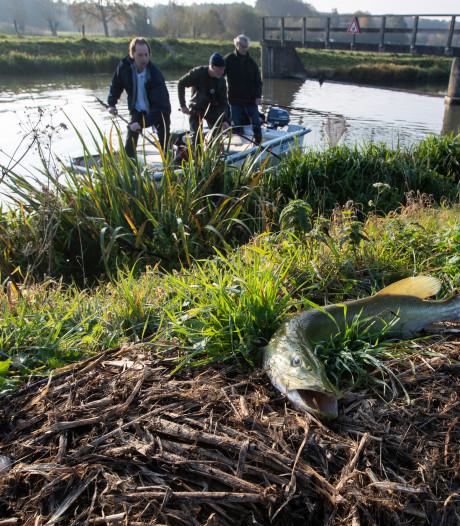 Te hoge druk op persleiding werd duizenden vissen in Berkel fataal