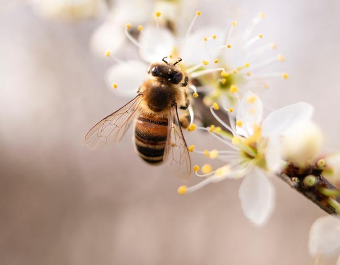 Kun Jij Raden Hoeveel Kilo Honing De Bijen In Soest Maken