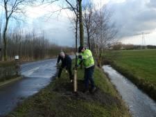 Al 200 gezonde bomen terug voor 300 gekapte zieke essen in Sint-Michielsgestel