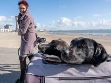 Honden op het Vlissingse strand: 'Al die regels gaan wel ver'