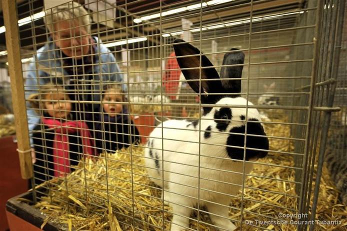 De liefhebbers van konijnen konden afgelopen weekend terecht op de jaarlijkse clubshow van 't Raskonijn in Oldenzaal.