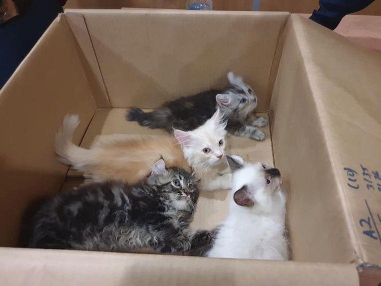 De kittens stellen het goed.