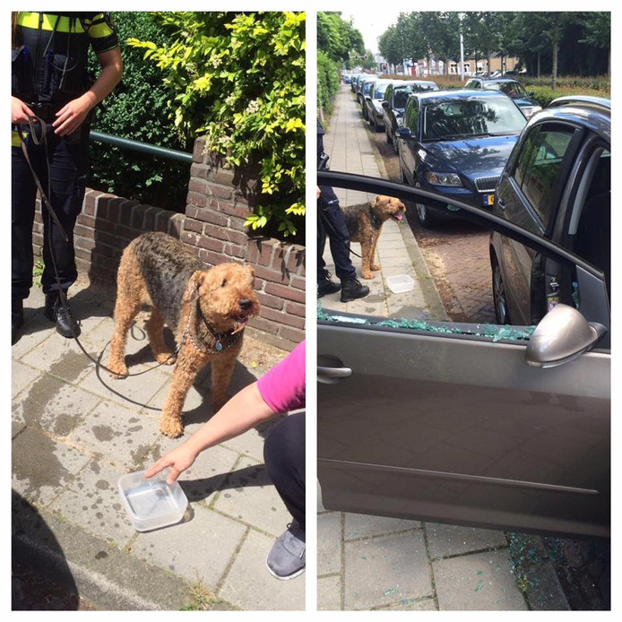 De hond nadat agenten het dier hebben gered uit de auto in Wageningen.