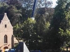 Markante beuken van 120 jaar oud bij kerk in 's-Heerenberg moeten wijken