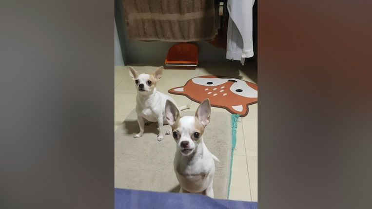 Hop en zijn broertje Tua Lek