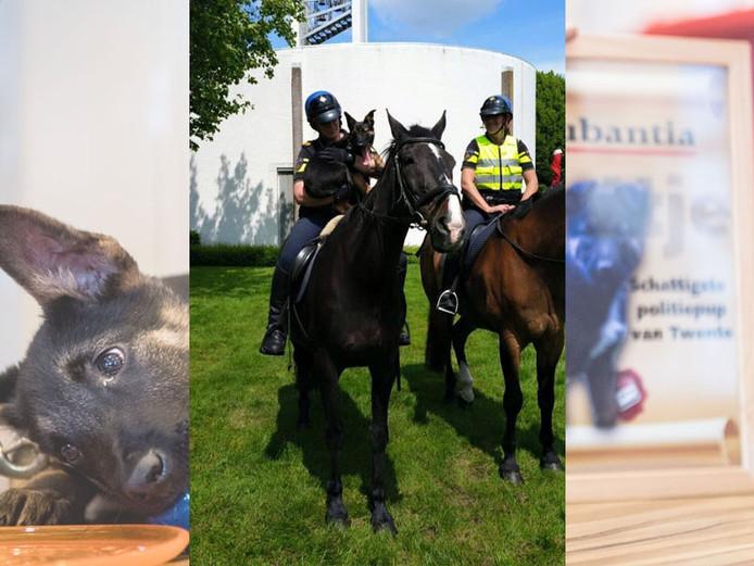 Foto's: Politie Almelo en Emiel Muijderman