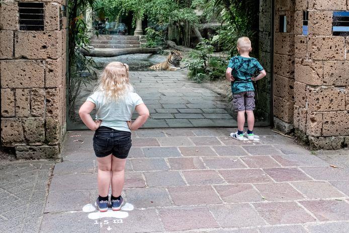 Febe (3) en Stijn (6)  van der Horst uit Hoevelaken kijken op 1,5 meter afstand naar de tijger