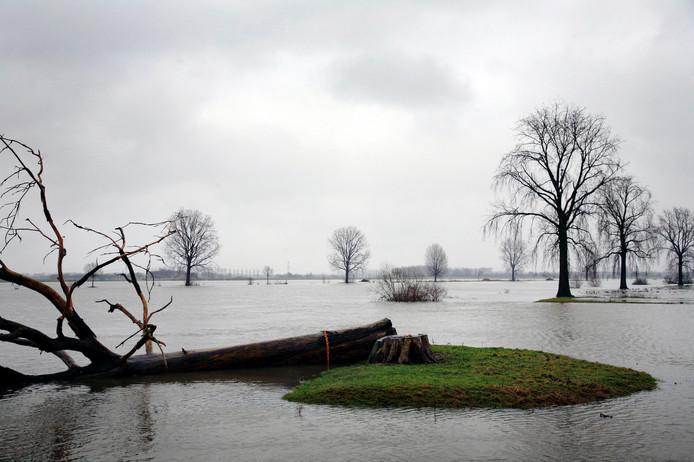 Januari 2011, hoogwater bij Megen. Goed te zien is waarvoor de bakenbomen langs de Maas zijn geplant in de jaren dertig: als oriëntatiepunten. De gesneuvelde populier op de voorgrond ligt vast aan een ketting.