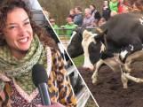 Eerste lentedag: Katja Schuurman laat de koeien vrij