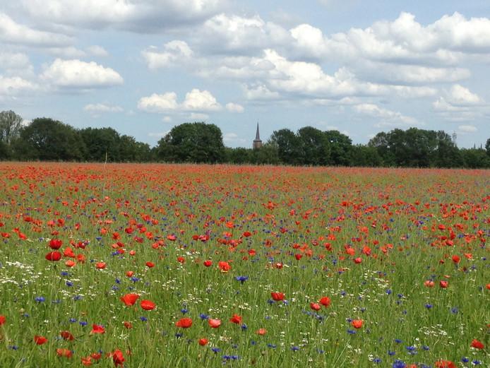 Bonte Brabantse bloemenpracht in Geldrop.