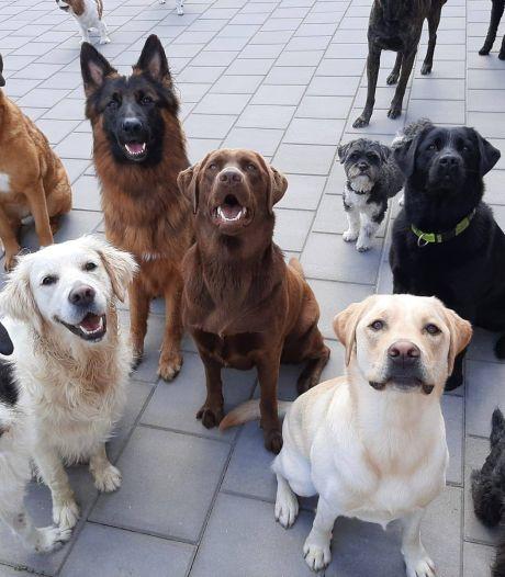 Buren vrezen blaffende honden bij dierenpension Riel