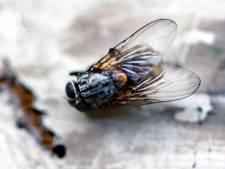 Onderzoek: kinderboerderij oorzaak vliegenplaag Heijplaat