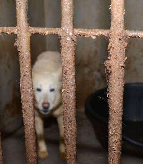 Dierenbescherming had fokker in Deventer al langer op de korrel, justitie wil fokverbod voor eigenaar
