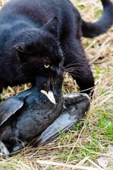 Zelfs vogelliefhebbers betwijfelen nut afschieten zwerfkatten