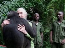 Un chimpanzé libéré remercie sa bienfaitrice