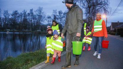 Meer dan vijftig padden veilig de straat over gezet dankzij natuurliefhebbers De Dammen