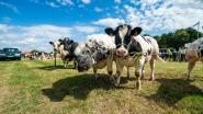 84ste veeprijskamp in Pulderbos