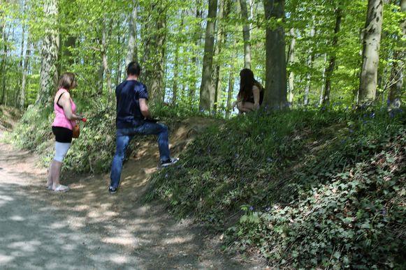 Met duizenden trokken dagjestoeristen dit paasweekend naar de paarse bloementapijten in het Hallerbos.  Maar niet iedereen hield zich altijd aan de regels.