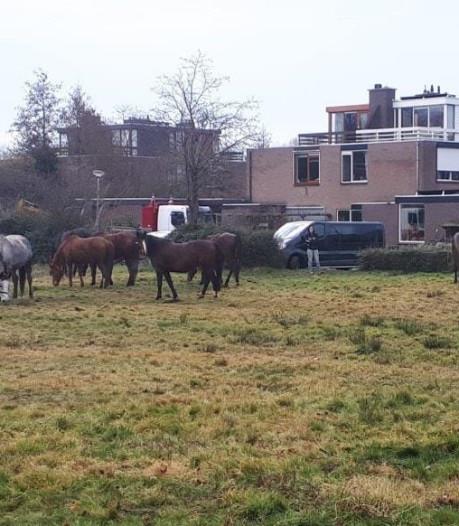 Merries breken los en vertoeven in Waddinxveense woonwijk