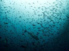 Bijna alle blikjes tonijn bevatten 'ploftonijn'