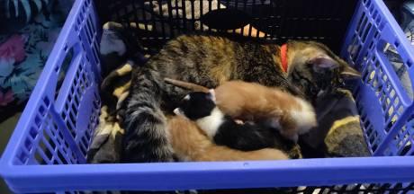 KNRM redt tien 'schattige' katjes van jacht bij Harderwijk