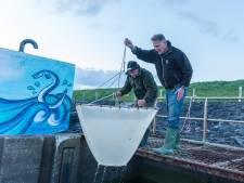 Gemaal de Noord op Tholen krijgt met voorrang een vispassage