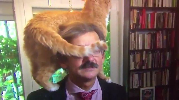De man gaat onverstoorbaar verder terwijl de kat op zijn schouders rondwandelt.