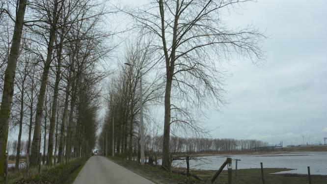 Drijdijk behoudt grootste deel van bomen en meer dan 1.000 nieuwe exemplaren zorgen voor buffer van haven