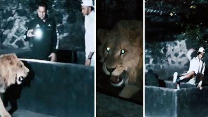 Hamilton speelt in Mexico met leeuw, waarna viervoudig F1-wereldkampioen het op een lopen moet zetten