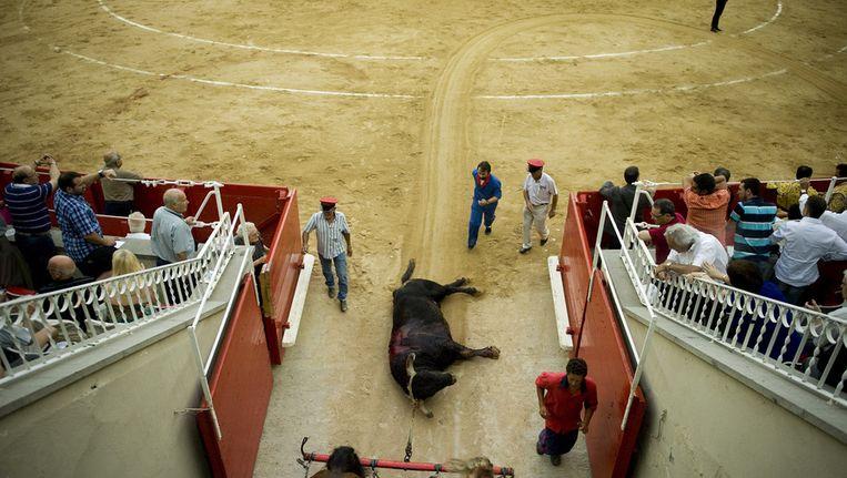 Archieffoto van een dode stier na afloop van een stierengevecht. Beeld getty