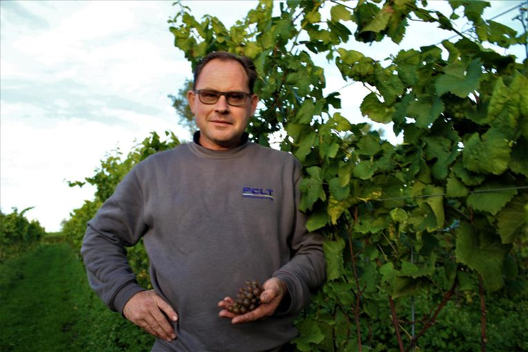 Marino Moenaert toont de druiven die hij oogst op de flanken van de Ruidenberg.