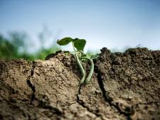 Boeren en waterschappen bezorgd: het is nu alweer veel te droog
