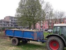 Resterende boom bij Zuidergebouw Oss krijgt geen bescherming