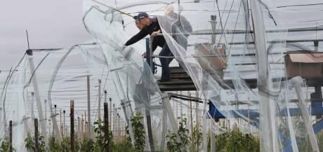 Ruim vijf hectare aan hagelnetten om een nieuw appelras te beschermen