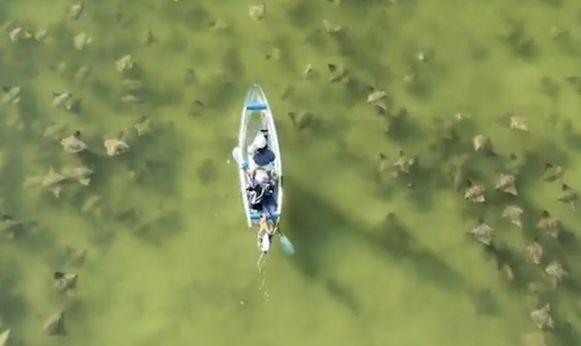 Michael McCarthy ging vorige week kanoën in St. Pete Beach in Florida en kwam tussen een school roggen terecht.