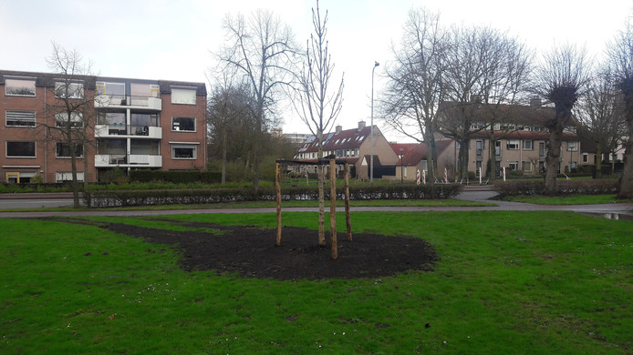 De Anne Frankboom van Veenendaal.